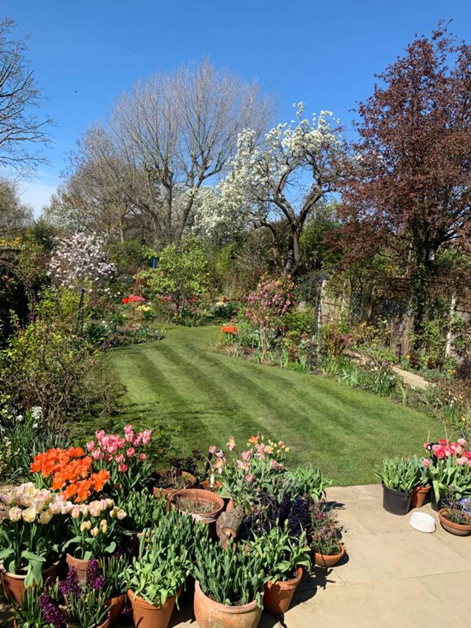 flores de jardin imagenes: Un jardinero inglés pasando la cuarentena 4