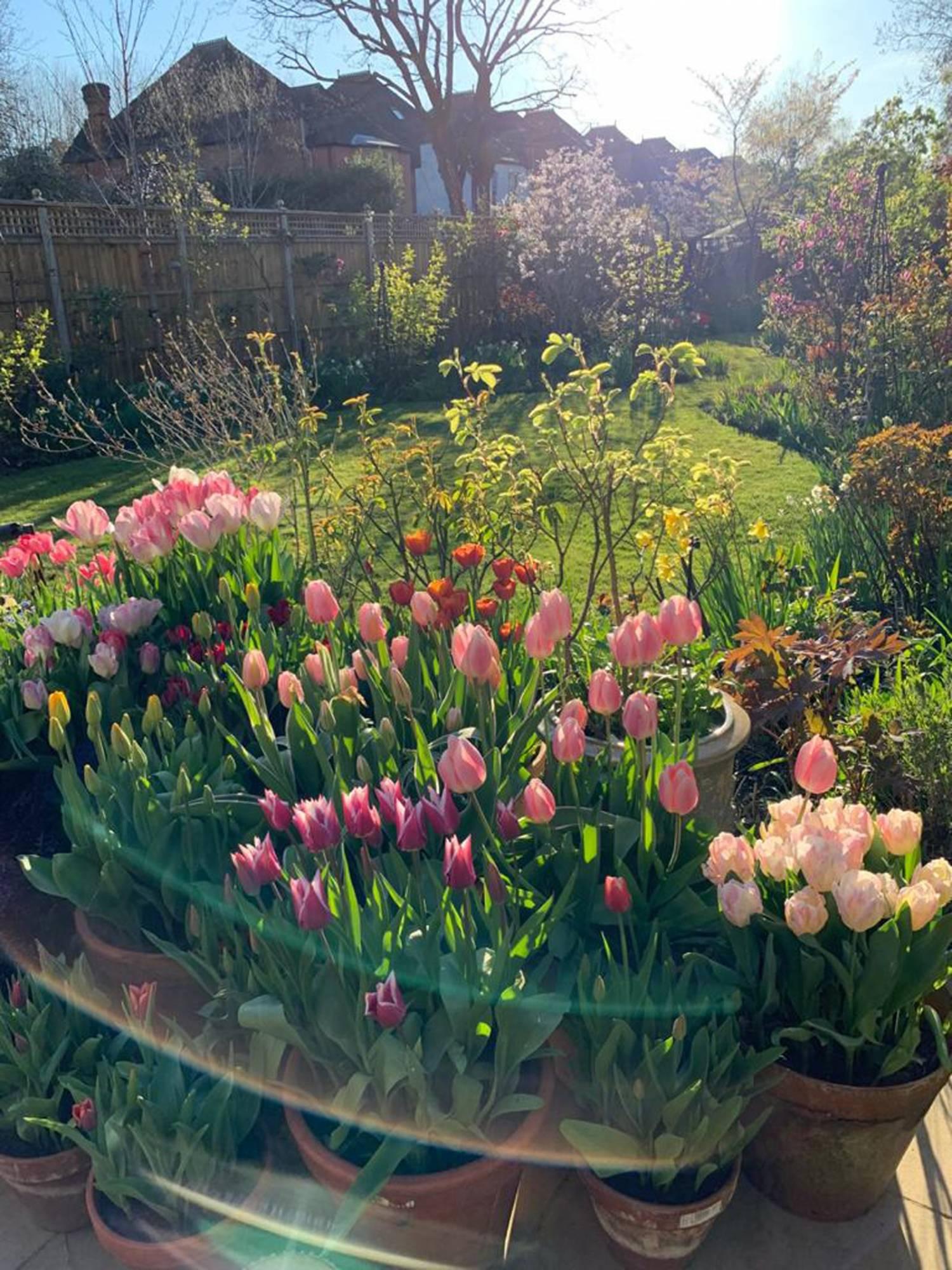 flores de jardin imagenes: Un jardinero inglés pasando la cuarentena 2