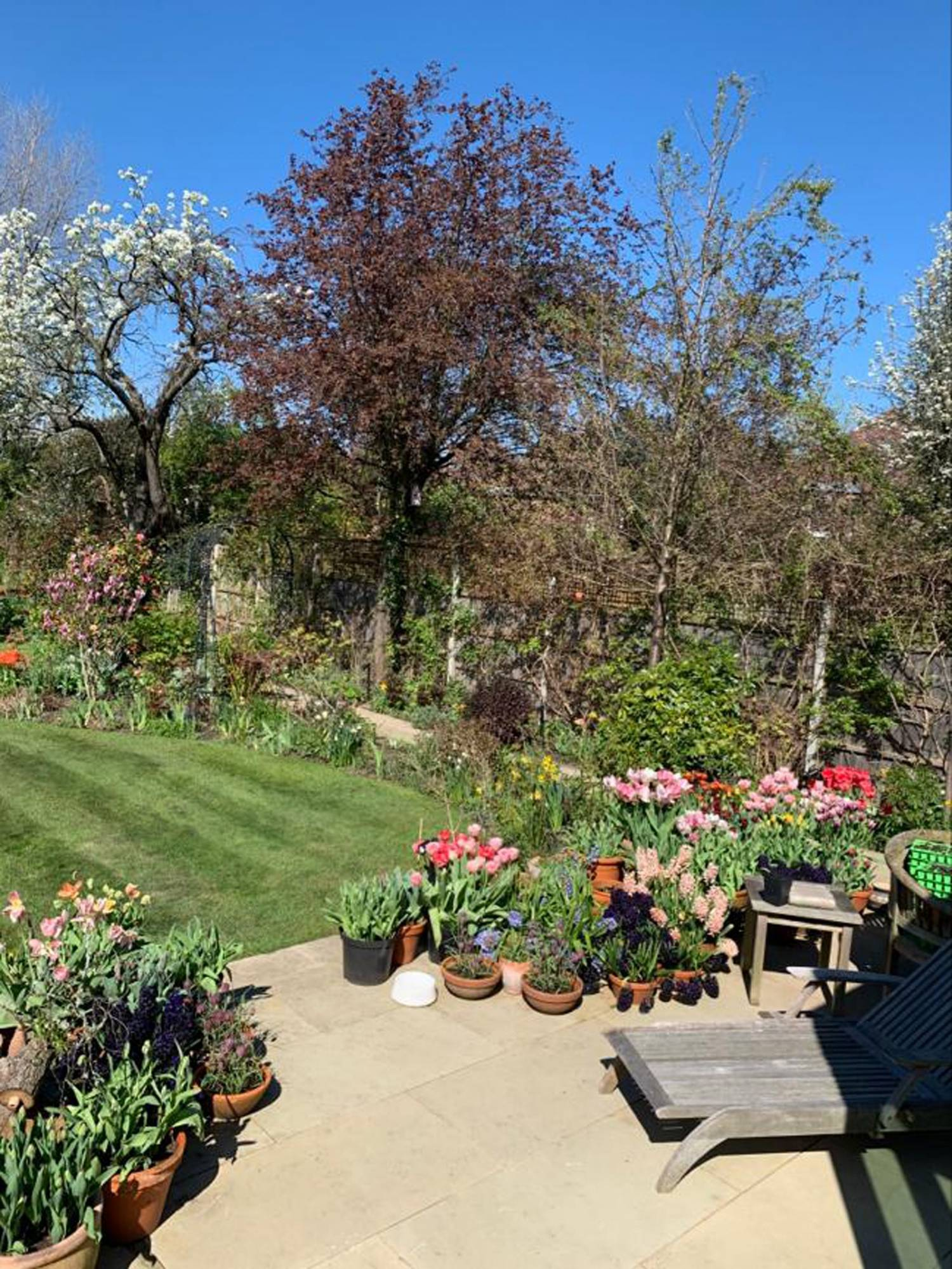 flores de jardin imagenes: Un jardinero inglés pasando la cuarentena 1