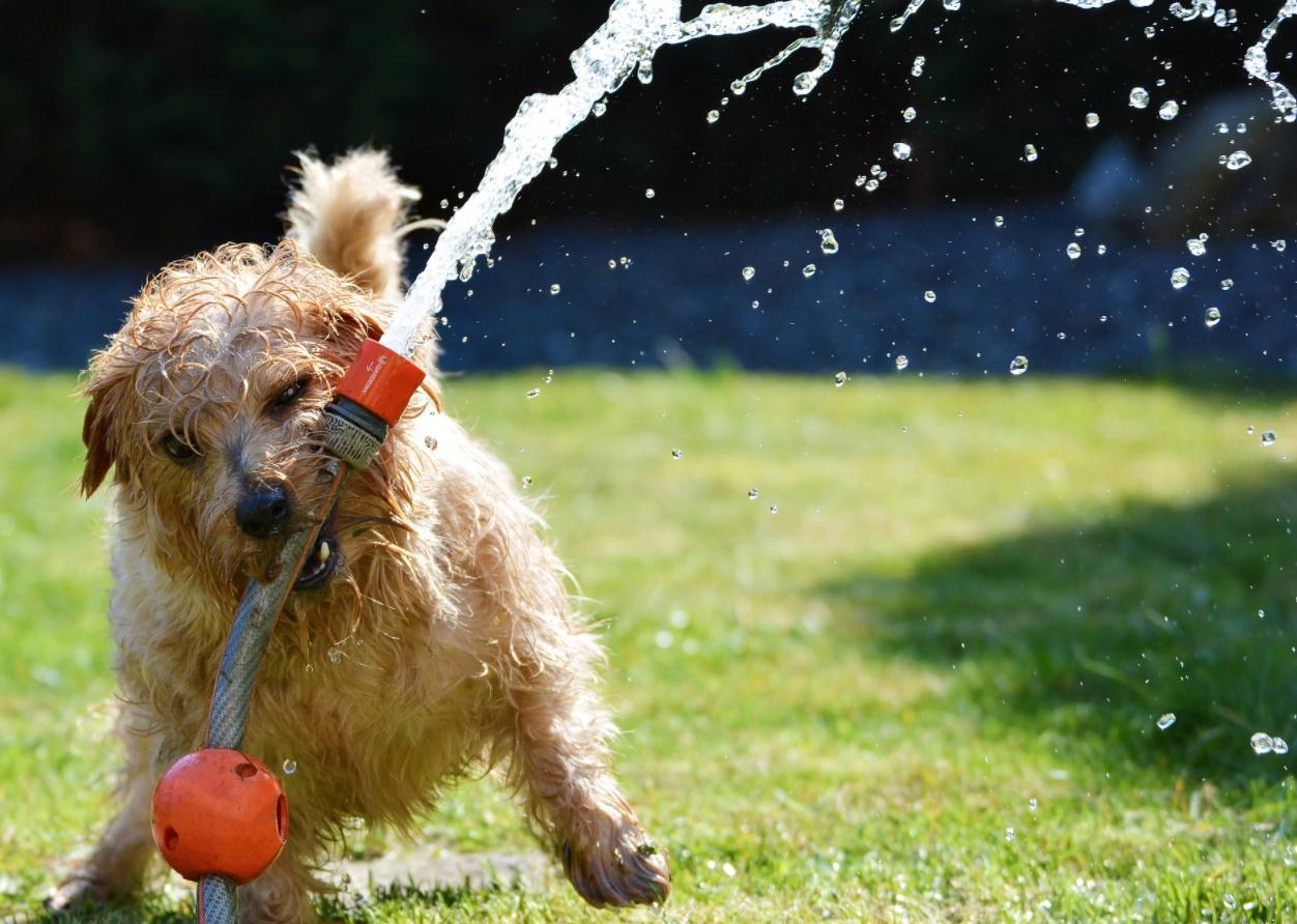 Como alejar los perros del jardín: Cosas que funcionan 1