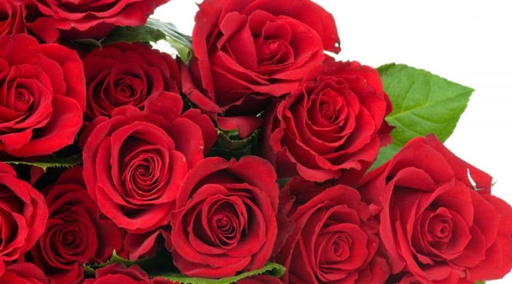 Las rosas rojas, ¿por qué simbolizan el amor? 3