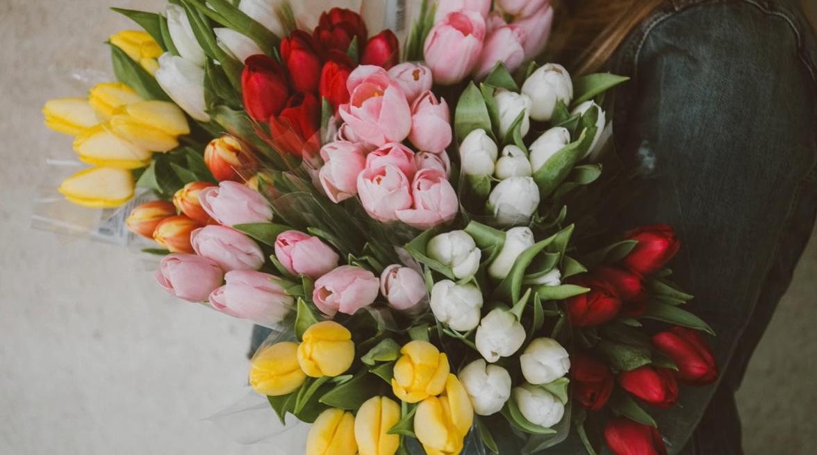 Por qué plantar tulipanes en tu jardín