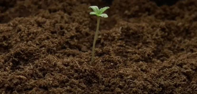 Como mejorar el suelo para tus plantas 3