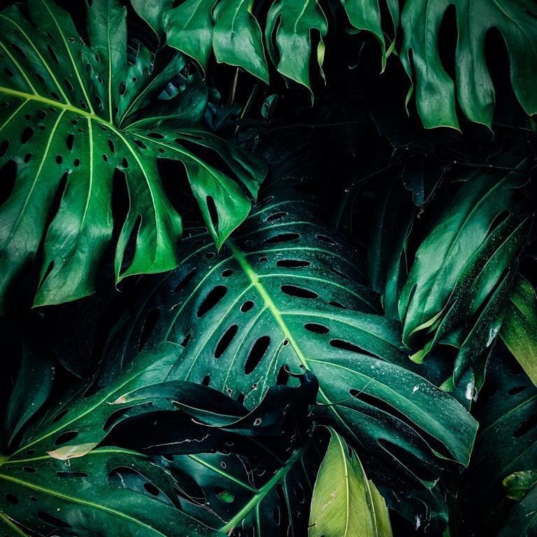Cómo evitar que las plantas se mueran en vacaciones