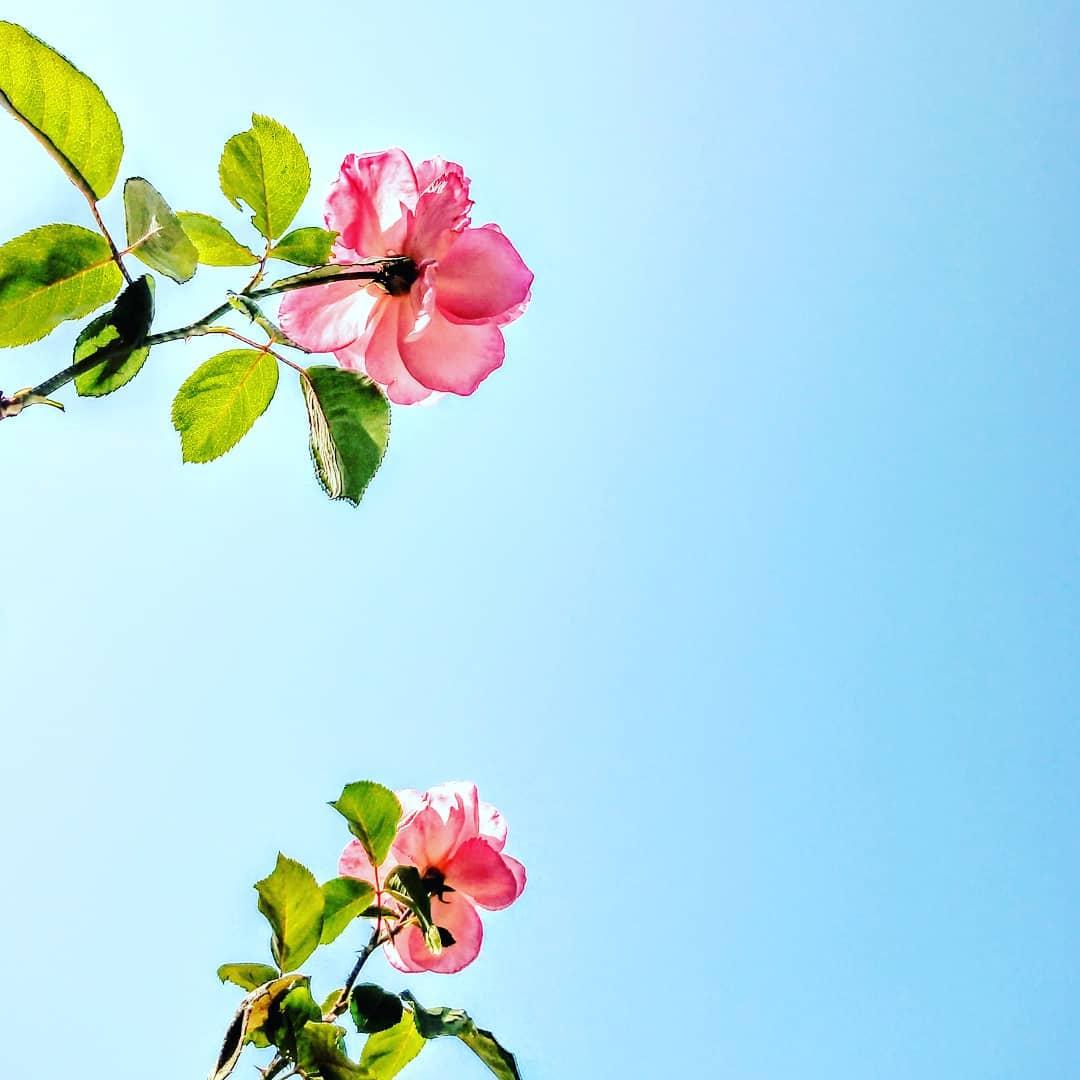 Tips para cuidar y trabajar tu jardín